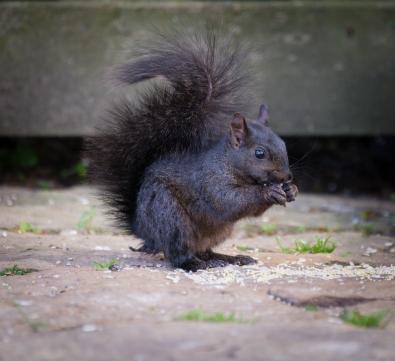 Squirrel_20160621_0002