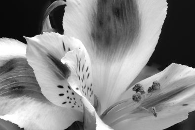 Foral in Black and white
