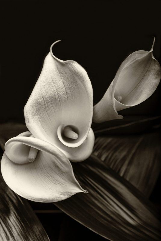 Calla Lilly Trio