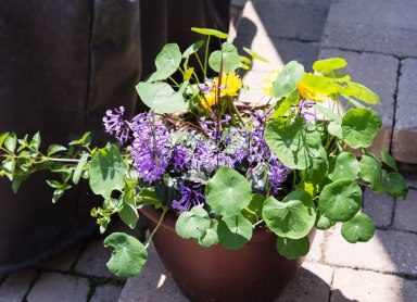 Potted Colour