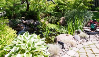 Pond with Sunbathing Frog