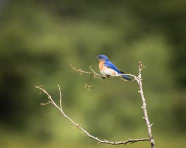 Bluebird_20170627_0003-Edit