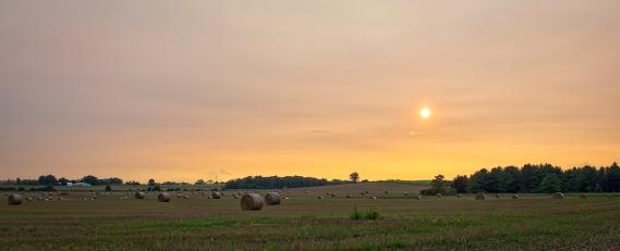 Elora Field