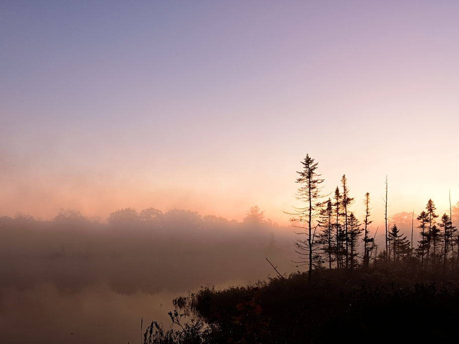 Early Morning at Torrence Barrens