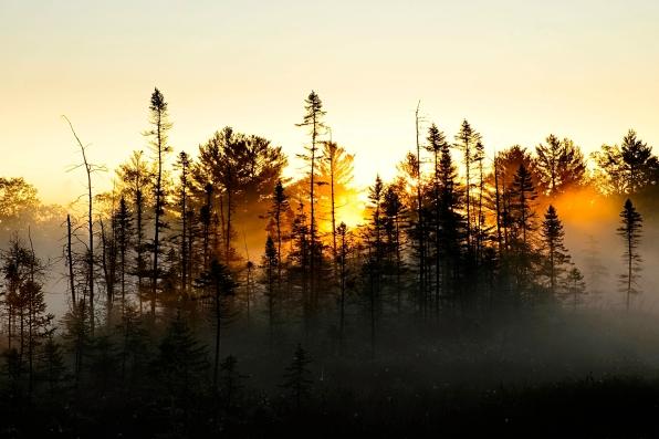 Morning Mist at Torrence Barrens